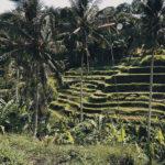 Zorganizuj swój wyjazd na Bali – noclegi, transport, porady